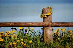 Wianek od dandelions na ogrodzeniu w wiosce Zdjęcia Royalty Free