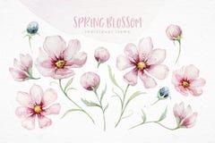 Wianek okwitnięcie menchii czereśniowi kwiaty w akwarela stylu z białym tłem Set lato kwitnący japończyk Sakura ilustracji