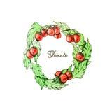 Wianek pomidory Obraz Stock