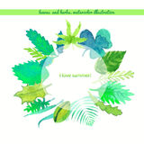 Wianków ziele i liści lato Wektorowa akwareli ilustracja Obraz Royalty Free