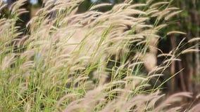 Wiatrów ciosy pięknie Trawa uderza wiatr zbiory wideo