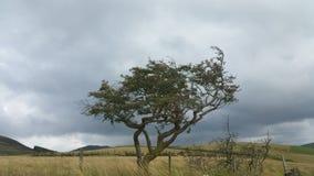 Wiatr bijący drzewo Obraz Royalty Free