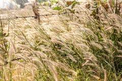 Wiatr dmuchająca trawa Obrazy Royalty Free