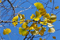Wiatr drzeje daleko żółtych liście znowu obraz stock