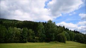 Wiatr i drzewa w górach zbiory wideo