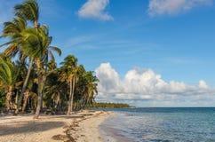 Wiatr i drzewka palmowe na Catalonia Bavaro wyrzucać na brzeg w republice dominikańskiej zdjęcia royalty free