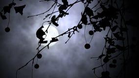 Wiatr i księżyc w pełni