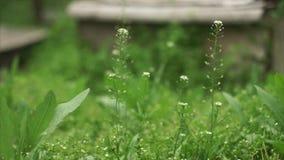Wiatr kiwa trawy zdjęcie wideo