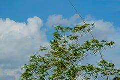 Wiatr liście i chmurny niebieskie niebo, Zdjęcie Stock
