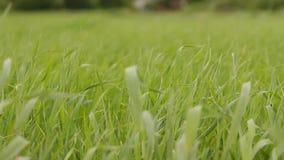 Wiatr macha trawy zbiory wideo