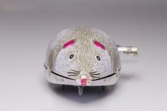 Wiatr mysz Fotografia Stock
