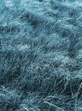 wiatr trawy. Obraz Royalty Free
