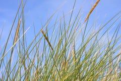 wiatr trawy. Fotografia Royalty Free
