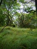Wiatr w lesie zdjęcia royalty free