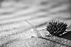 Wiatr Wysadzający liść w piasku & oset Zdjęcie Royalty Free