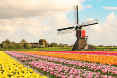 Wiatraczek i tulipany Obrazy Royalty Free