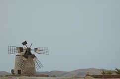 Wiatraczek w Fuerteventura (Spain) Fotografia Royalty Free