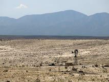Wiatraczek w pustyni Obrazy Royalty Free
