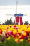 Wiatraczek w tulipanowym gospodarstwie rolnym Fotografia Royalty Free