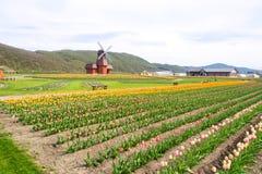 Wiatraczek z pięknym tulipanu polem Zdjęcie Stock