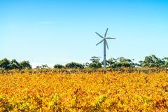 Wiatraczki w Riverland winnicy fotografia royalty free