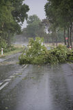 Wiatrowa burzy szkoda Fotografia Stock