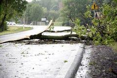 Wiatrowa burzy szkoda Fotografia Royalty Free