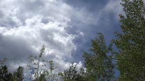 Wiatrowa szeleszcząca osika opuszcza Manitou wiosny Kolorado zdjęcie wideo