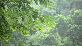 Wiatrowe dmuchanie gałązki, liście i zdjęcie wideo