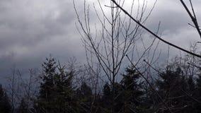 Wiatrowe podmuchowe burz chmury nad krzakami i gałąź zdjęcie wideo