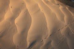 Wiatrowe tekstury na piasku Fotografia Stock
