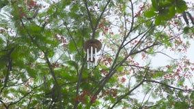 Wiatrowego chime obwieszenie na drzewie w ogródzie Feng shui wiatrowy dzwon na gałąź drzewo Feng shui symbolu pojęcie zbiory