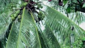 Wiatrowego chime tubki wisząca ozdoba, kokosowej palmy tło zbiory wideo