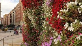 Wiatrowego falowania kwitnące begonie, nagietki i petunie w Europejskim centrum miasta, zbiory
