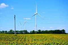 Wiatrowego gospodarstwa rolnego słonecznika pole Dobrudja Bułgaria Zdjęcia Stock