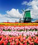 Wiatrowi Holenderów młyny Zdjęcia Stock