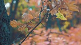 Wiatrowi szelesty suszą liście w jesień lesie zbiory
