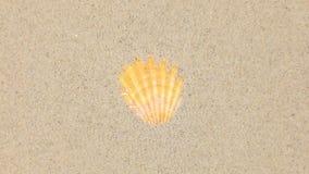 Wiatrowy dmuchanie na piaska i otwarcia koloru żółtego seashells zbiory