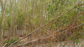Wiatrowy dmuchanie przez średniej wielkości drzew zdjęcie wideo