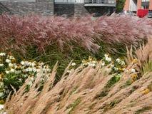 Wiatrowy dmuchanie przez traw Obraz Stock