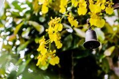 Wiatrowy dzwon i świeże żółte orchidee jako tło obraz royalty free