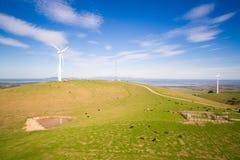 Wiatrowy gospodarstwo rolne w Australia Zdjęcia Royalty Free