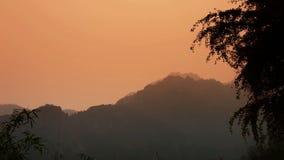 Wiatrowy potrząsalny Ginkgo drzewo i bambus, góry, wzgórze zdjęcie wideo