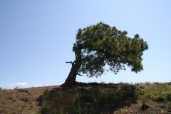 Wiatru przegięty drzewo Zdjęcie Stock
