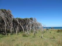 Wiatry zamiatający obszary trawiaści i drzewa Fotografia Stock