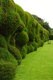 Wibbly颤抖的树篱, Montacute议院,萨默塞特,英国 免版税库存图片