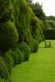 Wibbly Chwiejny żywopłot, Montacute dom, Somerset, Anglia fotografia stock