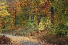 Wibrujący spadków kolory zaświecają w górę New Hampshire Hampshire backroads obraz royalty free