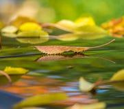 Wibrująca jesień coloured liście Fotografia Royalty Free