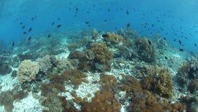 Wibrująca różnorodność biologiczna na rafie koralowa w Indonezja zdjęcie wideo